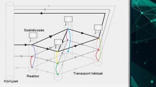 Csatolt kémiai reakció-hálózatok szabályozása