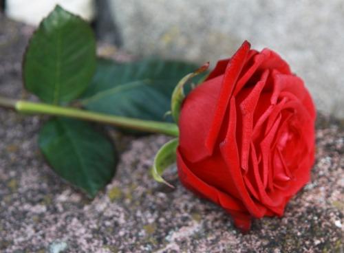 Elhunyt Wagner István kertészmérnök, növénynemesítő